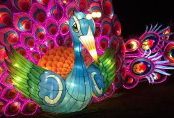 Magical Lantern Festival 2017_Peacock