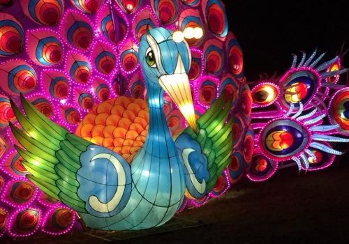 Magical Lantern Festival 2017_Peacock