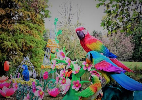 Parrot Lanterns @ The Magical Lantern Festival 2017 @ Chiswick House