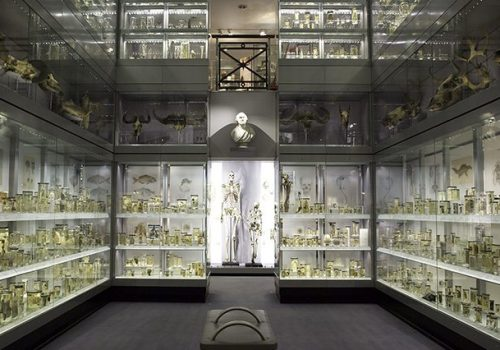 Hunterian Museum @ The Royal College of Surgeon's